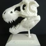 3-D dinosaur skull